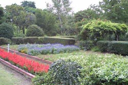 自然観察実習園 実習園散策8
